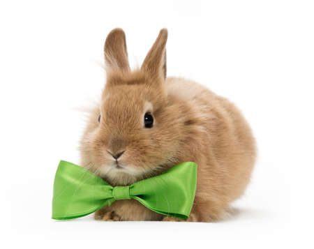 bunny rabbit: brown baby rabbit with a green bow on white background