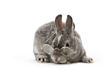 grey baby rabbit with little glasses on white background
