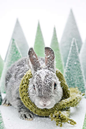 grey baby rabbit with green scarf and snow in a artificial green paper forrest Stock Photo