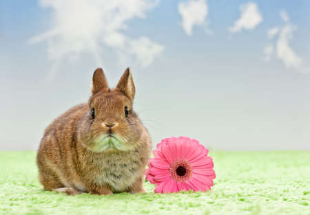 baby rabbit with flower on grass, blue sky photo