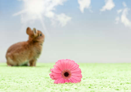 little rabbit out of focus with flower on artificial grass, blue sky photo