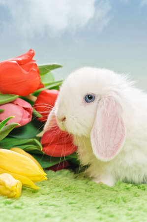 white baby rabbit with flowers on grass and blue sky photo