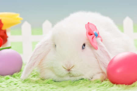 white baby rabbit with a bow, flowers and easter eggs photo