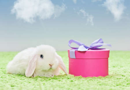 white baby rabbit with pink present on grass with blue sky photo