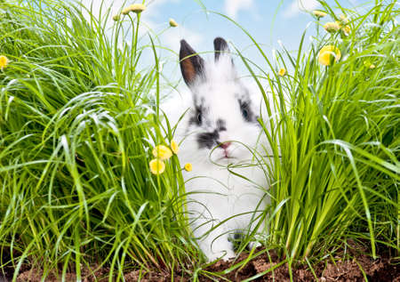 baby rabbit in a meadow with blue sky photo