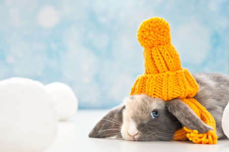 baby rabbit: little rabbit with woolly hat in a winter scene Stock Photo