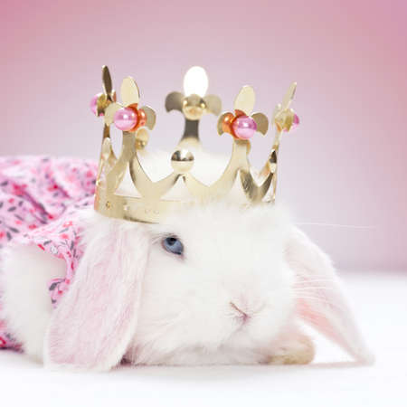 white baby rabbit with golden crown and pink background photo