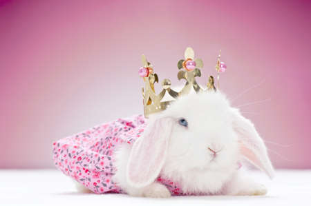white baby rabbit with golden crown and pink background