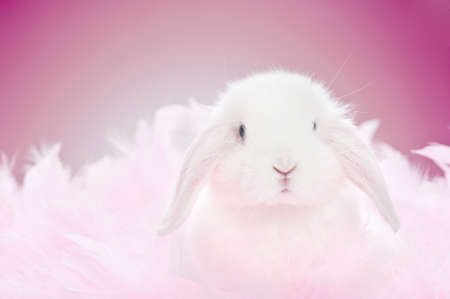 white baby rabbit in pink feathers