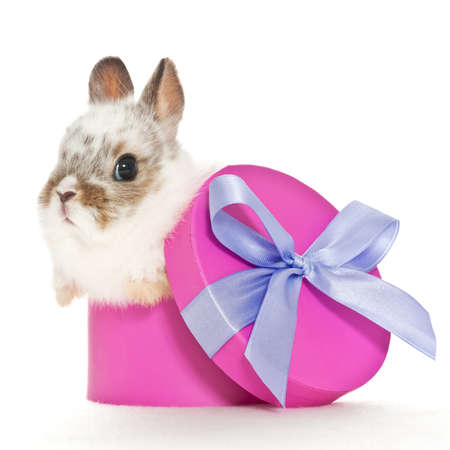 baby rabbit sitting in a purple box with a bow photo