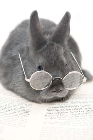 small, grey rabbit with little glasses reading a book Stock Photo
