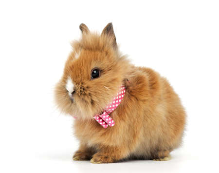 baby rabbit with a bow on white background