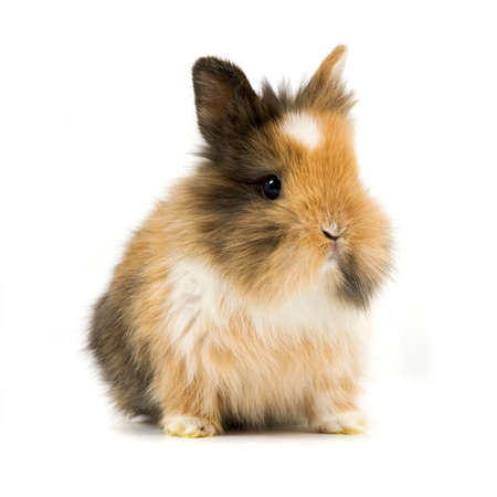 baby rabbit on white background Stock Photo