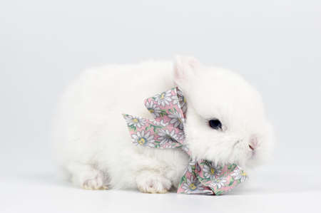white baby rabbit with a bow Stock Photo