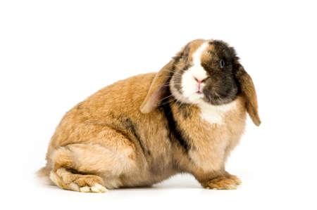 big rabbit on white background Stock Photo
