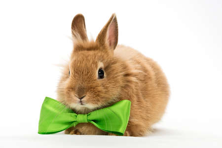 snugly: baby rabbit with a bow on white background