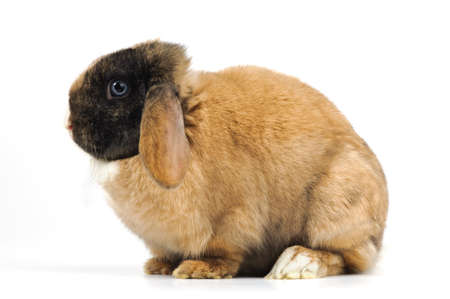 big rabbit on white background Stock Photo