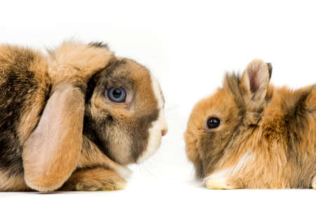 one big and one baby rabbit on white background Stock Photo