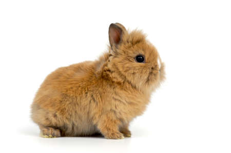baby rabbit on white background Stock Photo