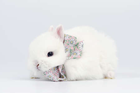 snugly: white baby rabbit with a bow Stock Photo