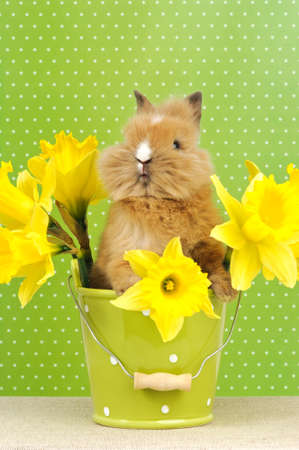 baby rabbit sitting in a green flower pot with daffodils