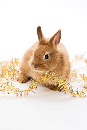 little rabbit with gold christmas decoration Stock Photo