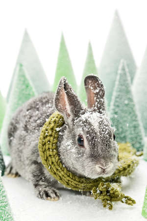 grey baby rabbit with a green scarf and snow in a artificial winter scene