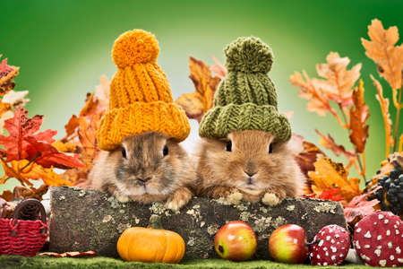 tow baby rabbits with wooly knitted hats in a autumn landscape Stock Photo