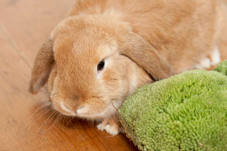 brown rabbit on wood with moss