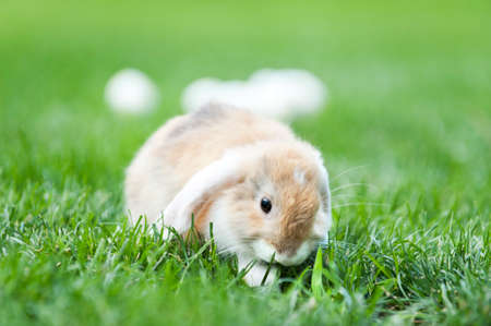 little rabbit in the garden with easter eggs