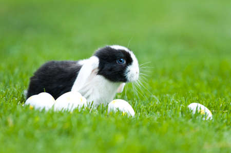 little rabbit in the garden with easter eggs photo