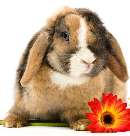 easter bunny with flowers on white background photo