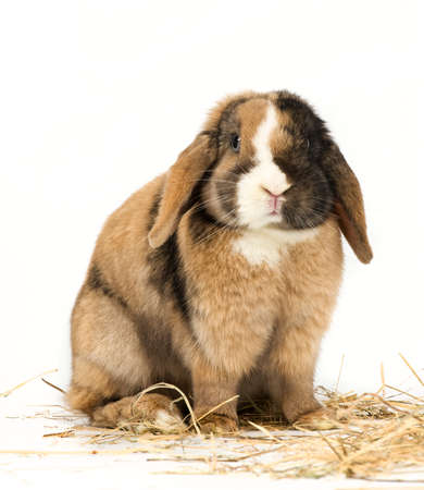 lapin blanc: Lapin de Pâques avec de la paille sur fond blanc Banque d'images