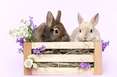 two baby rabbits in a box with flowers and mauve colored background