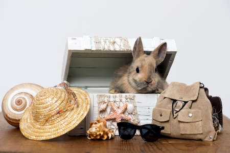 little rabbit in a box with beach holiday decoration Stock Photo