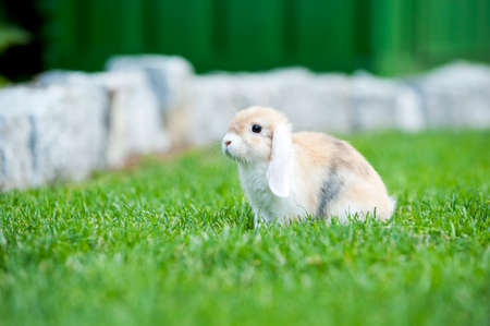 baby rabbit free in the garden outside photo