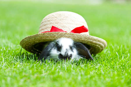 little rabbit with a hat in the garden Stock Photo