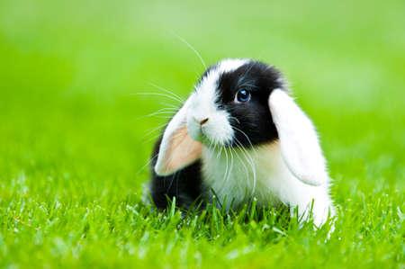 lapin blanc: bébé lapin libre dans le jardin extérieur