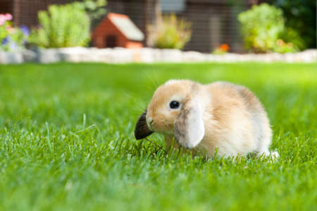 baby rabbit free in the garden outside