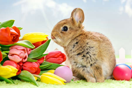 easter baby rabbit with tulis and eggs sitting in a little garden Stock Photo