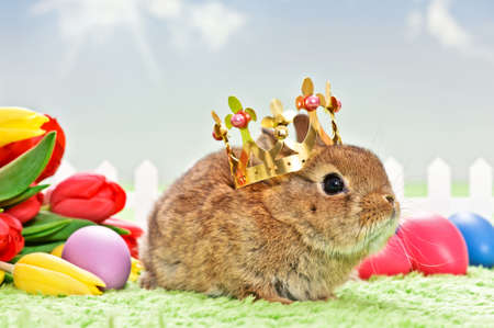 baby rabbit with golden crown photo