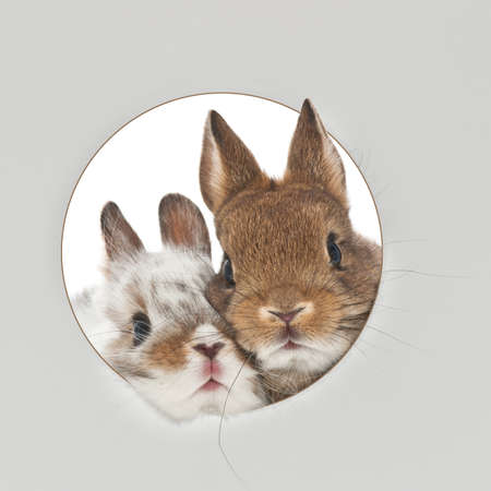 portrait of two baby rabbits through a round hole