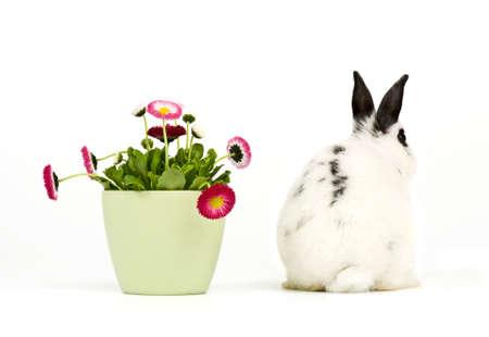 lapin blanc: Littel lapin de Pâques en noir et blanc par derrière avec pot de fleurs sur fond blanc