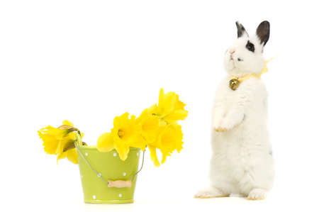 easter bunny with a pot of daffodils