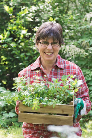 sweet woodruff: a woman in the garden carrying a box with herbs