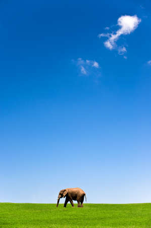 exploratory: wild elephant on grass with blue sky and a cloud