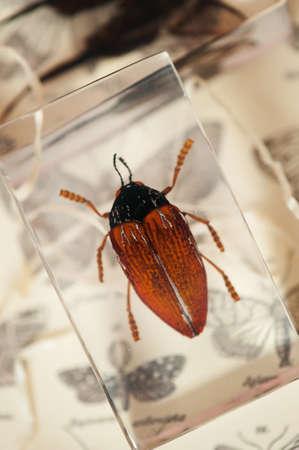seres vivos: Insectos conserva en material acr�lico claro