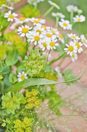blumen: Nahmaufnahme von Blumen im Garten