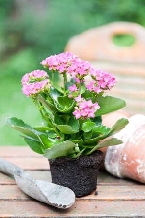blumen: Blumen zum eintopfen im Garten Stock Photo