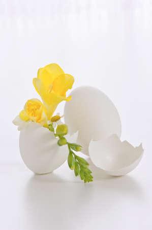 blumen: Osterei mit Blumen auf weissem Hintergrund